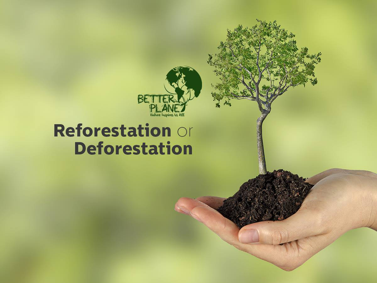 Planting it Forward with Better Planet Paper