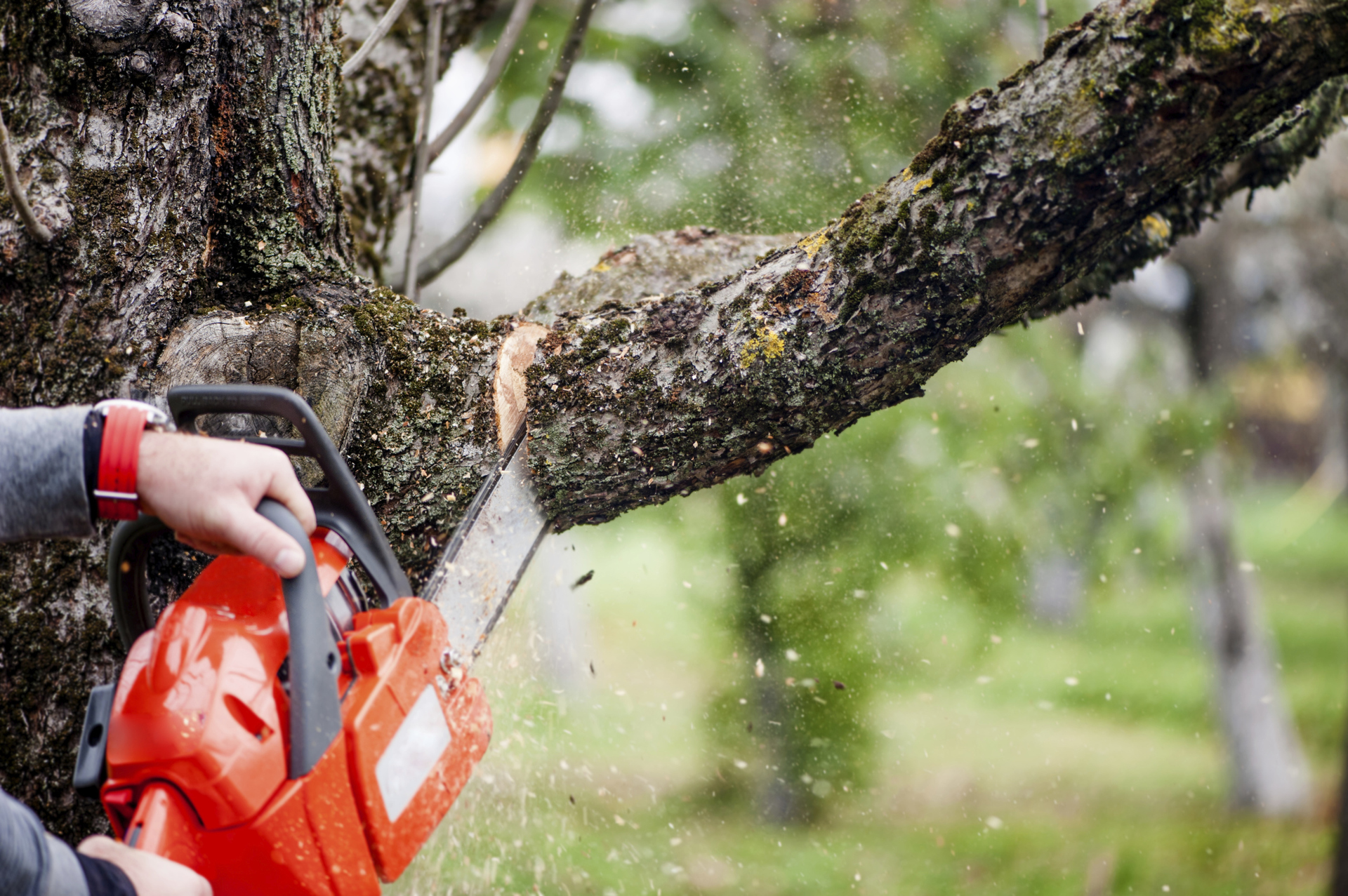 "Beware Of ""Shady"" Tree Services"