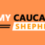 Profile picture of caucasian shepherd puppies for sale